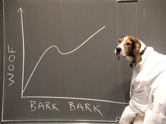 scientist-dog-presentation-woof-bark-bark
